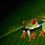 Un guide pour votre autotour au Costa Rica
